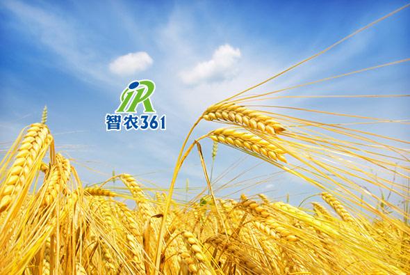 智农361
